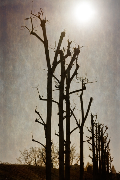 """Bare Trees"""