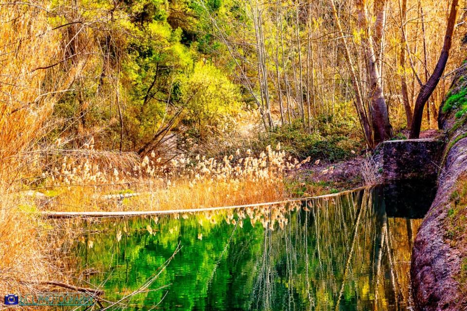 Beech forest (Barcelona)
